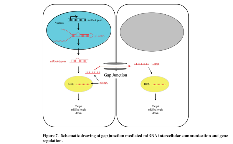 mirnas and genes in cin Our objective is to identify the related mirnas and their associations with genes frequently involved in crc microsatellite instability (msi) and chromosomal instability (cin) signaling pathways results.